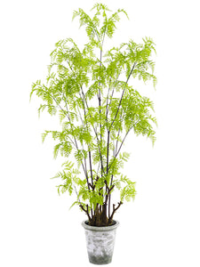 "62"" Lace Fern Tree in Clay Pot  Green (pack of 1)"