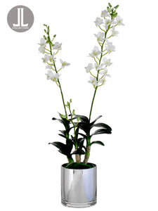 "30"" Dendrobium Orchid Plant in Glass Vase White (pack of 1)"
