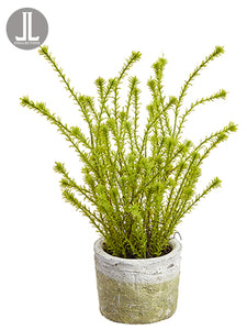 "14"" Horseweed Plant in Clay Pot Green (pack of 6)"