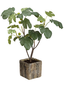 "32"" Fig Tree in Cement Planter Green (pack of 1)"