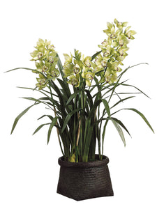 "42"" Cymbidium Orchid Plant in Woven Basket Green (pack of 1)"