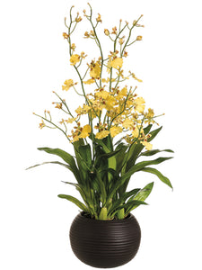 "38"" Dancing Orchid Plant in Sphere Vase Yellow (pack of 1)"