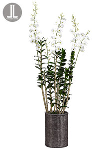 "67"" Dendrobium Orchid Plant in Cement Pot White (pack of 1)"