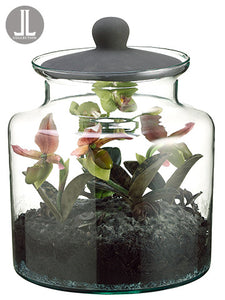 "10.5"" Mini Phalaenopsis/Lady's Slipper Plant in Glass Jar w/Lid Lime (pack of 1)"