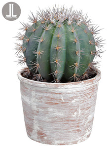 "14"" Barrel Cactus in Clay Pot  Green (pack of 1)"