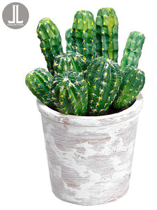 "9.5"" Cactus in Clay Pot  Green (pack of 6)"