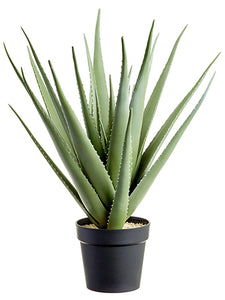 "27"" Aloe Plant in Plastic Pot  Green Gray (pack of 1)"