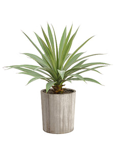 "26"" Agave Plant in Wood Planter Green (pack of 2)"