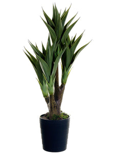 "39"" Agave Attenuata Plant x4 in Black Plastic Pot Green (pack of 4)"