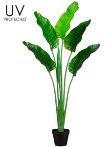 "64"" UV Protected Plastic Bird of Paradise Plant in Pot Green (pack of 2)"