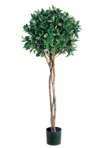 4' Bay Leaf Topiary with Braided Trunk in Pot  (pack of 2)