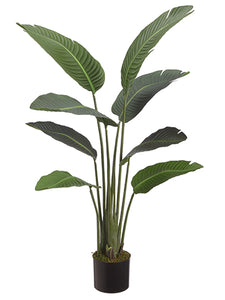 "45"" Bird of Paradise Plant With 8 Leaves in Pot Green (pack of 2)"