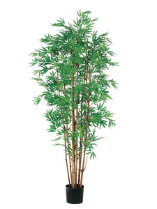 5' Japanese Bamboo Tree x12 with 2400 Leaves in Pot Two Tone Green (pack of 2)