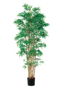 6' Japanese Bamboo Tree x15 with 3360 Leaves in Pot Two Tone Green (pack of 2)