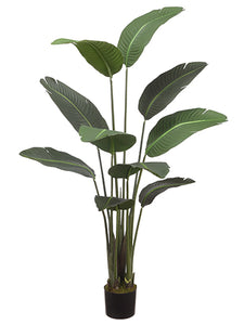 "60"" Bird of Paradise Plant With 10 Leaves in Pot Green (pack of 2)"