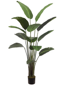 "75"" Bird of Paradise Plant With 12 Leaves in Pot Green (pack of 2)"