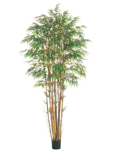 8' Natural Trunk Bamboo Tree x17 w/3040 Lvs. in Pot Two Tone Green (pack of 2)