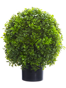 "16"" Boxwood Ball Topiary in Nursery Pot Green (pack of 1)"