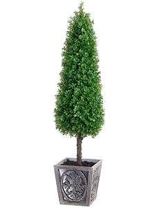 "41"" Boxwood Cone Topiary in Pot Green (pack of 1)"