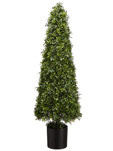 "49"" Boxwood Cone Topiary in Nursery Pot Green (pack of 1)"