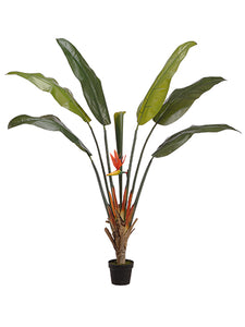 "67"" Bird of Paradise Plant With 6 Leaves And 1 Bud in Pot Green Two Tone (pack of 2)"
