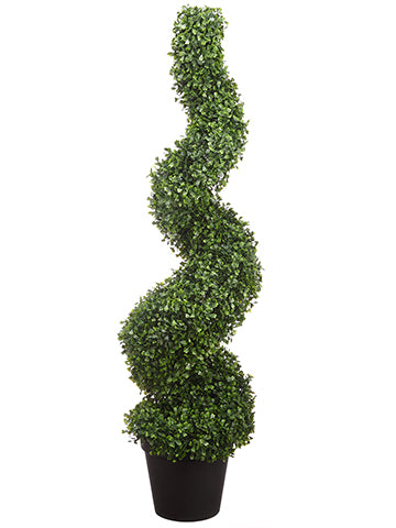 4' Boxwood Spiral in Pot  Green (pack of 1)