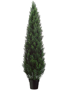 "72"" Cedar Topiary in Plastic Pot (knock-down Packing) Green (pack of 1)"