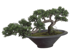 "14""Hx20""L Trailing Cedar Bonsai Tree in Pot Green (pack of 1)"