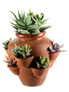 "12""H Cactus Garden in Terra Cotta Container Green (pack of 1)"