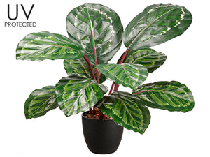"24.5"" UV Protected PVC Calathea Orbifolia Plant in Platic Nursery Pot Green Purpl (pack of 4)"