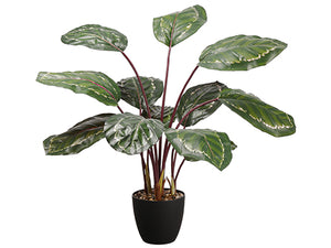 "39"" UV Protected PVC Calathea Orbifolia Plant in Plastic Nursery Pot Green Purple (pack of 2)"