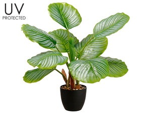 "25"" UV Protected PVC Calathea Orbifolia Plant in Plastic Nursery Pot Green (pack of 4)"