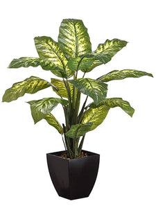 "40"" Diffenbachia Plant in Plastic Pot Green Variegated (pack of 4)"
