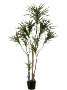 6' Outdoor Dracaena Marginata Tree with 418 Leaves in Plastic Pot Green Burgundy (pack of 2)