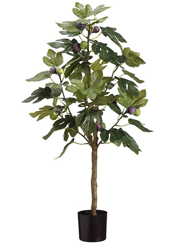 3' Fig Gree With Fruits in Pot Green (pack of 4)