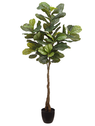 5' Fiddle Leaf Plant in Pot  Green (pack of 2)