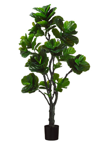 6' Eva Fiddle Plant with 144 Leaves in Black Plastic Pot Green (pack of 2)