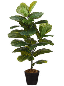 "31.5"" Fiddle Leaf Plant in Pot Green (pack of 6)"