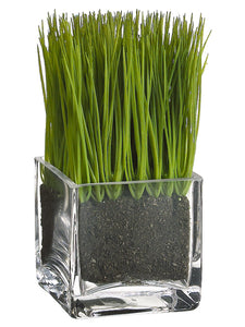 "6.5"" Lemon Grass in Glass Vase Green (pack of 6)"