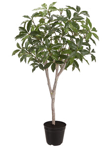 "36"" Laurel Plant in Plastic Pot Green (pack of 2)"