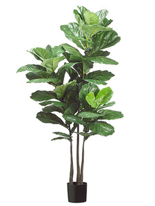 "70"" Fiddle Leaf Plant x3 with 53 Leaves in Pot Green (pack of 2)"
