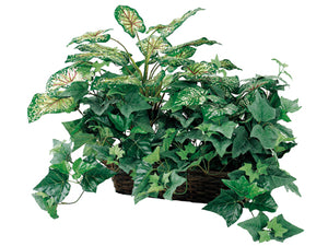 "18"" Caladium/Ivy in Ledge Basket Green Red (pack of 2)"