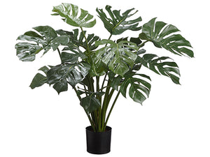 "34"" Split Philodendron Plant in Pot Green (pack of 2)"
