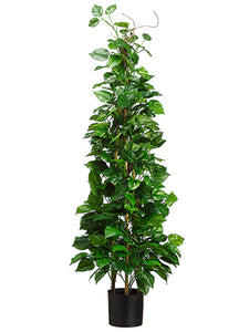 "66.5"" Pothos Tower Topiary in Pot Green Cream (pack of 2)"