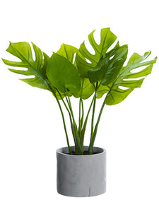 "21"" Split Philodendron Leaf Plant in Cement Pot Green (pack of 1)"