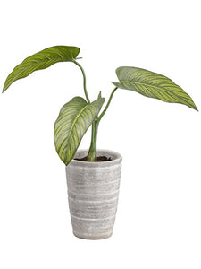 "12"" Philodendron Plant in Clay Pot Green (pack of 3)"