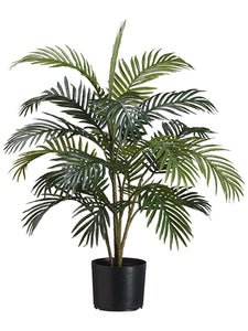 3' Areca Palm Tree x4 in Pot  Green (pack of 6)