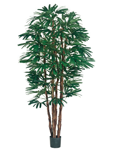 7' Rhapis Tree x6 with 1148 Leaves in Pot Two Tone Green (pack of 2)
