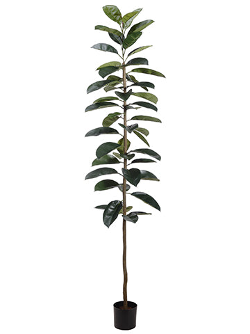 7' Rubber Plant in Pot  Green (pack of 2)