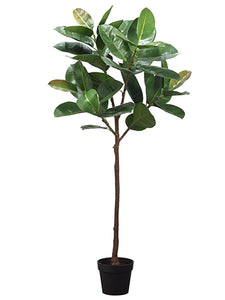 "58"" Rubber Tree Plant in Plastic Nursery Pot Green (pack of 2)"